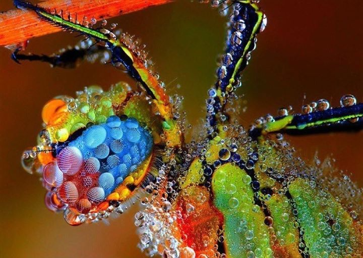 psychedelic spider